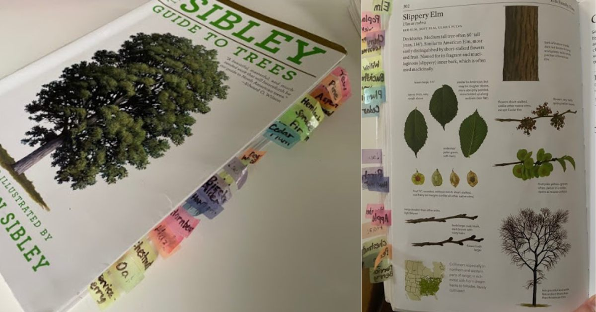 Sibley's Guide to Trees by David Allen Sibley