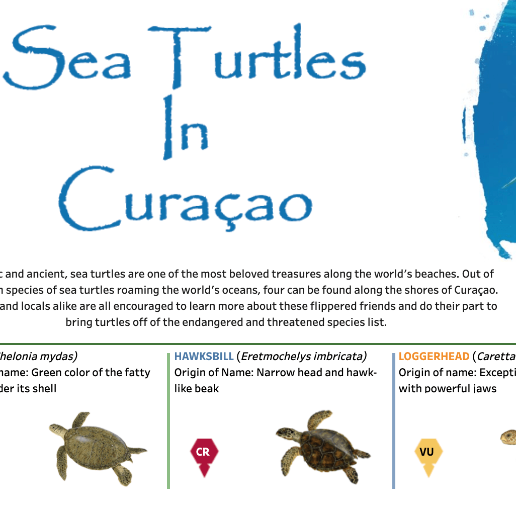 瀏覽至 Sea Turtles in Curacao